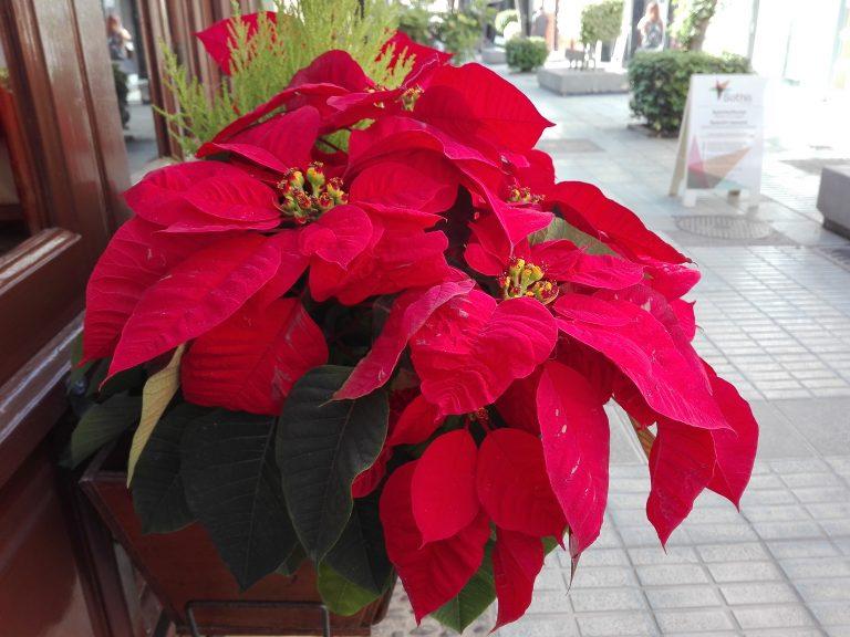 Weihnachten – und die andere Realität