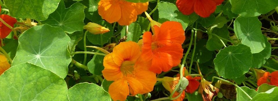Pflanzenheilkunde