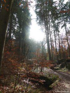 Herbst-lich(t)e Schlucht 1