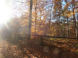 Herbst-lich(t)e Schlucht 2